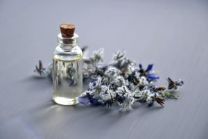 lavender plant and lavender essential oil